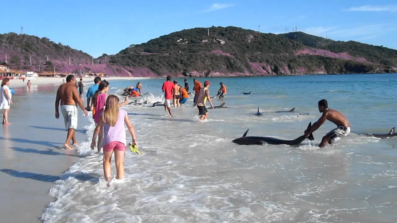 Strangers heroically save 30 beached dolphins from drowning