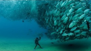 This Underwater Tornado of Jack Tuna Fish will Mesmerize You