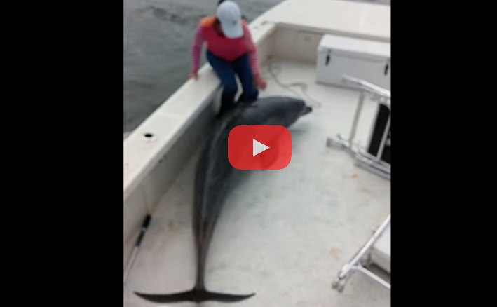 Dolphin Jumps Into Fishing Boat