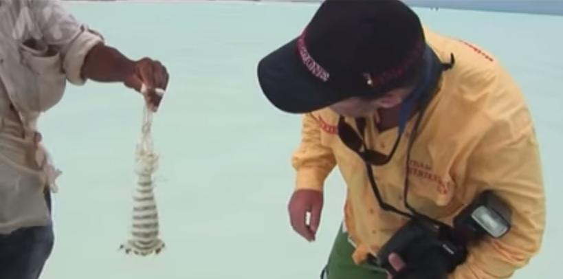 Catching Giant Mantis Shrimp Barehanded at Christmas Island