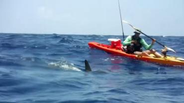 Hammerhead Shark vs Fishing Kayak