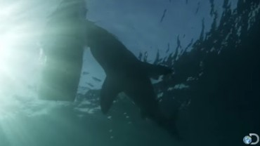 Inflatable Dingy Vs Great White Shark Video