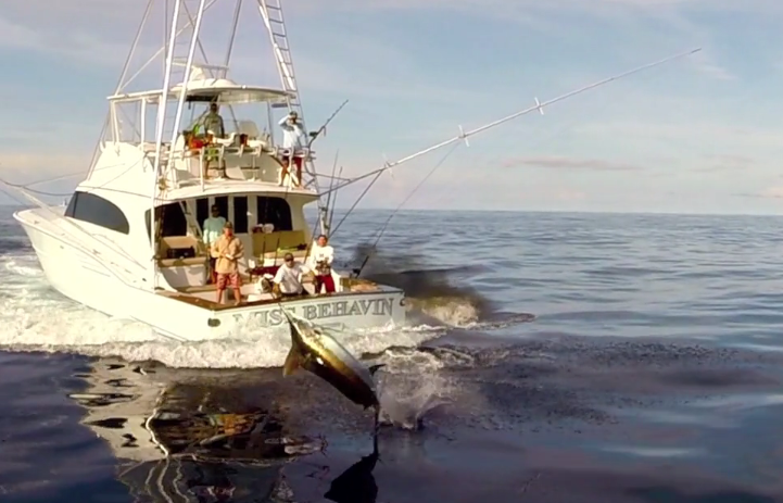 Sweet Drone Footage of Some Marlin Fishing