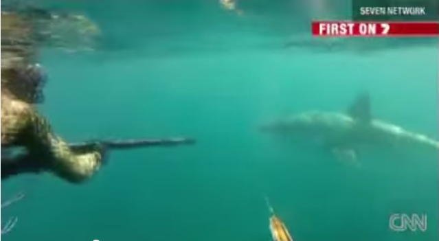 Two Guys Fight a Great White Shark While Spearfishing