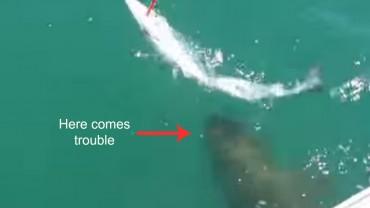 Goliath Grouper Swallows Jumbo Barracuda In One Gulp - Red Tuna Fishing Shirt Club
