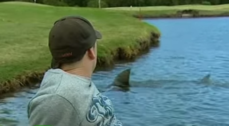 Killer Sharks Invade Golf Course In Australia - Red Tuna Fishing Shirt Club